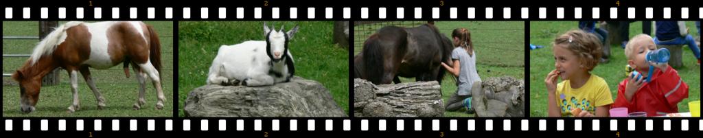 Filmstreifen Ponyhof